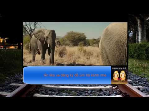pha trốn lày lội nhất năm chui hẳn vào bím voi :v
