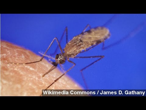 Climate Change Might Increase Risk Of Malaria