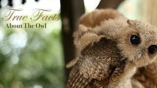 Ze Frank: True Facts About The Owl
