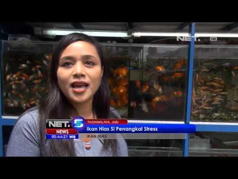 NET5 - Ikan hias penangkal stress