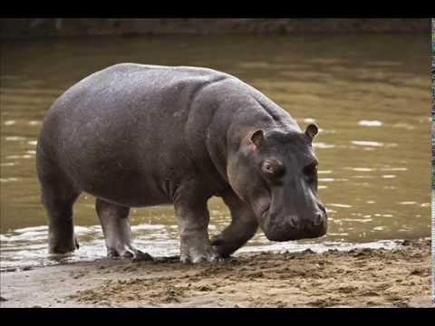 Dạy bé học - Các loài vật (hình ảnh và tiếng kêu) - DẠY BÉ HỌC  (phần mới nhất)