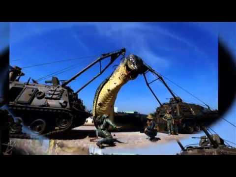 quân đội việt nam bắt được rắn khổng lồ Vietnam army catch giant snake