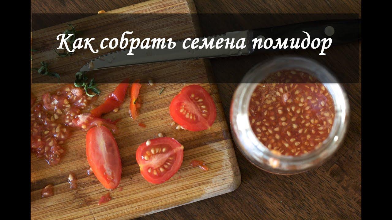 Как правильно вырастить рассаду помидоров в домашних 37