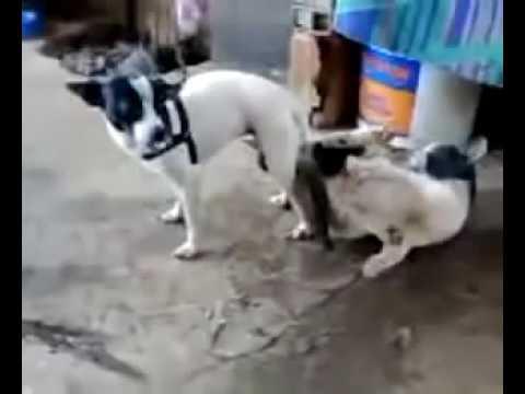 Phim Sex Thú  -  Chó Xếp Hình Với Mèo