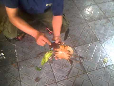 Papua Giant Crab