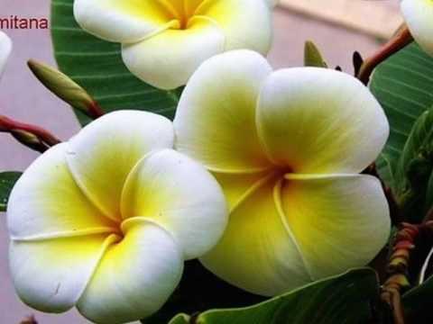 Foto di orchidee e fiori vari di michela youtube - Immagini di fiori tedeschi ...
