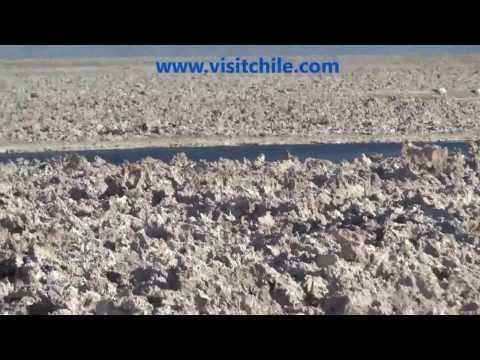 Flamingoes at Atacama Salt