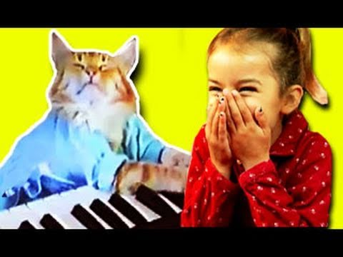 Keyboard Cat