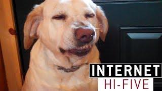 Videá previnilých psov