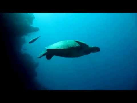 Sea Turtle Facts: 14 Facts about Sea Turtles