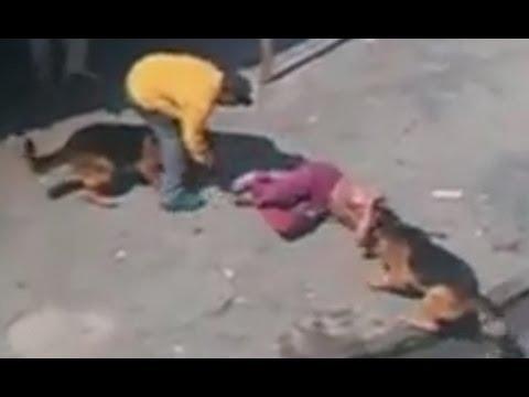 Two German shepherd dog attack human!
