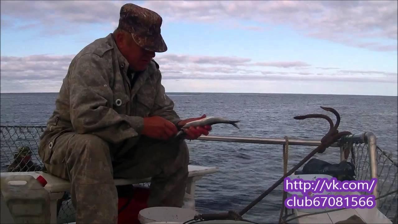 ловля сига на белом море видео