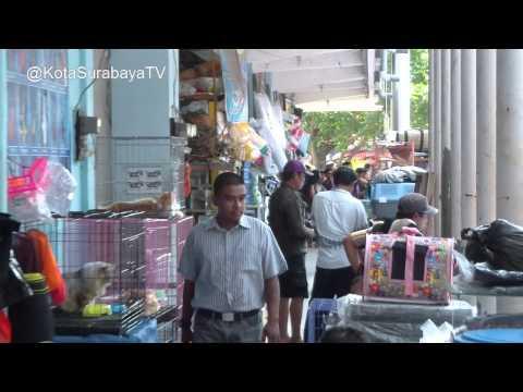 PASAR IKAN HIAS Gunungsari - Kota Surabaya