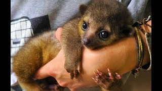 CUTEST Exotic Pets You Can Legally Own