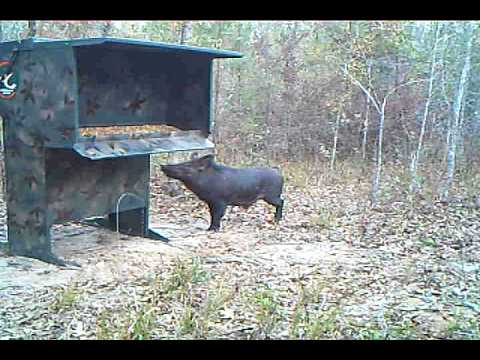 Download image hog proof deer feeders pc android iphone and ipad