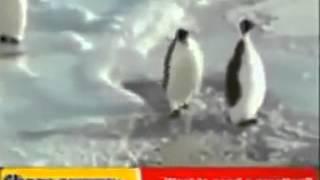 Pingüino graciosillo
