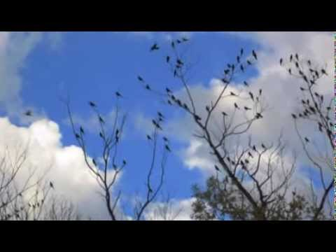 Tree full of birds