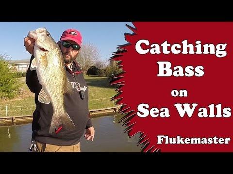 Bass Fishing on Sea Walls