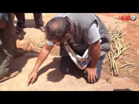 نقوش صخرية ليبية أمازيغية بأكلو
