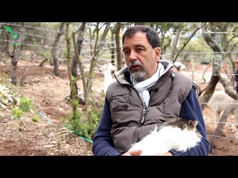 Claude l'Heureux : reconnexion du monde humain et animal