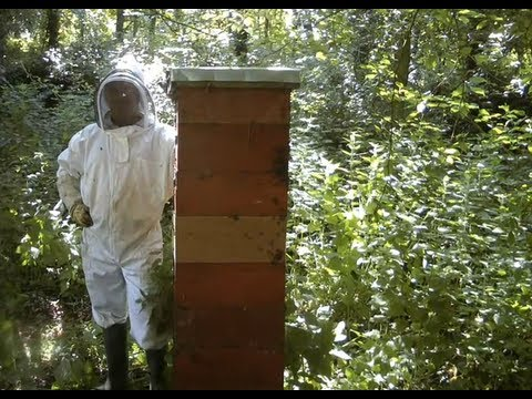 Tallest & Strongest Bee Hives or Colonies In the World / Using the Rose Hive Method Part 2