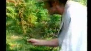 Monty Python - polowanie na komara