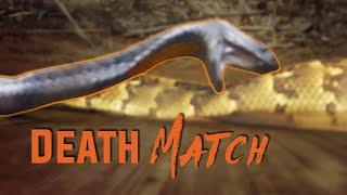 Deadly Snake Fight!