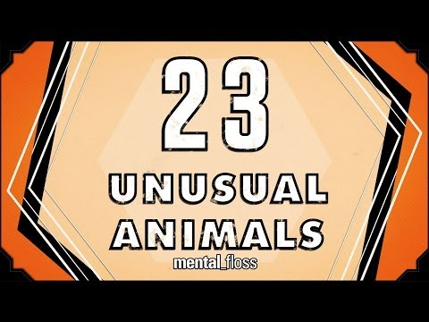 Some Very Unusual Animals