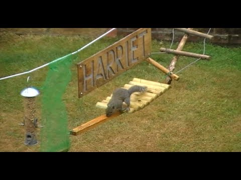 Thumbnail of video Double Squirrel Assault Course