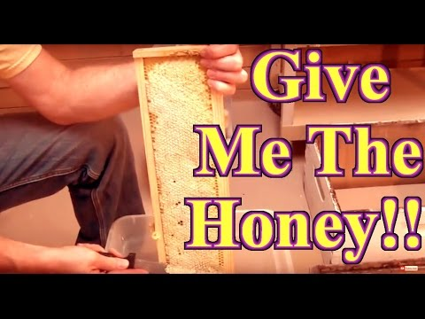 Beekeeping : How To Harvest Honey