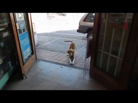 Local town dog daily visit to store in Salinas, PR