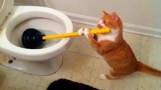 Caídas de gatos