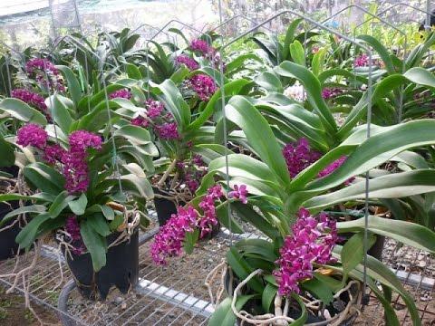 7 Loài Lan Rừng Tuyệt Đẹp Bạn Nên Có Ở Trong Vườn