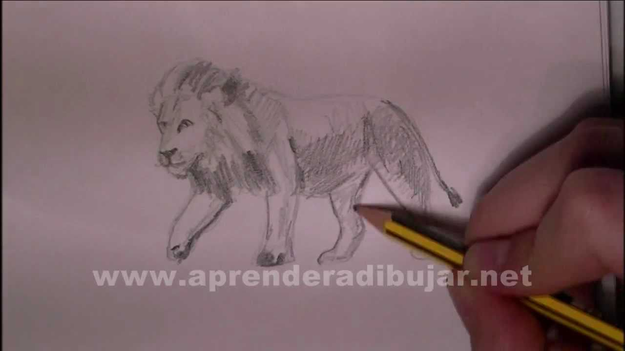 Dessin de lion comment dessiner youtube - Dessin tete de profil ...