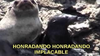 HIMNO DE MARCONA OFICIAL