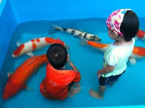 funny kid , Giant  fish !!!!!