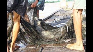 Lão ngư bắt 700 cá hô khủng nặng 140 kg trên sông Tiền Giang