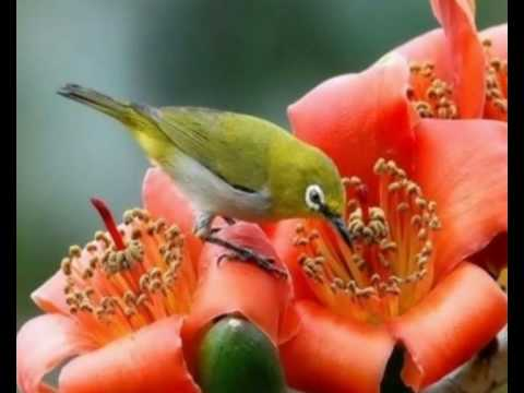 "♥♥ Beautiful Birds ♥♥, Differend kind of birds on the same flowers Copyright Disclaimer Under Section 107 of the Copyright Act 1976, allowance is made for ""fair use"" for purposes s..."