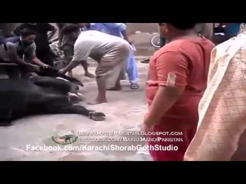 Karachi Shorab Goth Studio Qurbani  Video 1