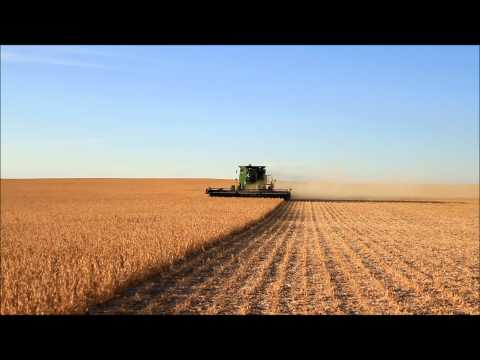 North Dakota Soybean Harvest 2012