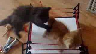 WWE Cat Wrestling