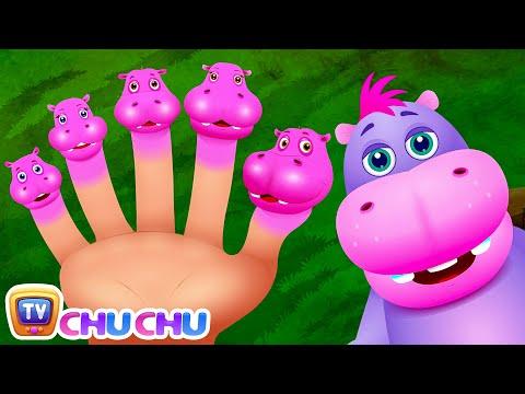 Finger Family Hippo   ChuChu TV Animal Finger Family Nursery Rhymes Songs For Children