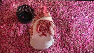 مزارع الورود في الطائف تزدهر في شهر رمضان