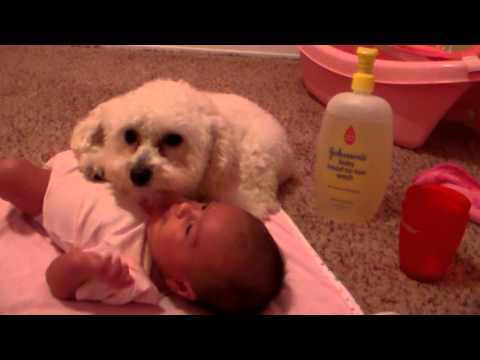 Thumbnail image for 'Dog Protects Baby? '