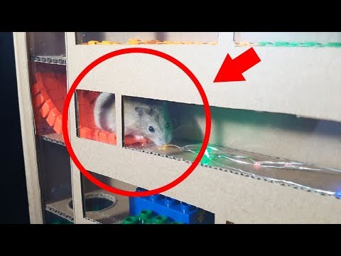 My Funny Pet Hamster in 5-LEVEL Maze Obstacle Course
