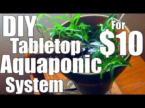 DIY Indoor Self-Sufficient Aquaponic Garden For $10!!!