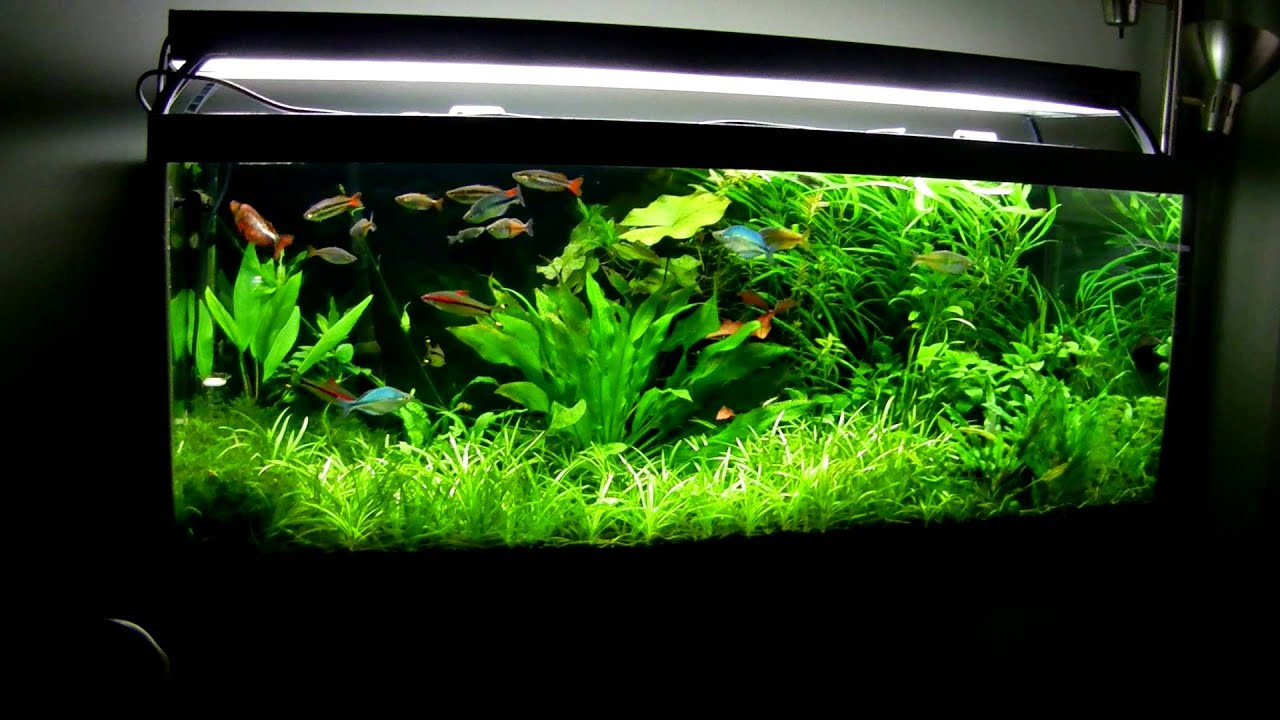 75 Gallon Fish Tank Youtube 75 Gallon Saltwater Fish
