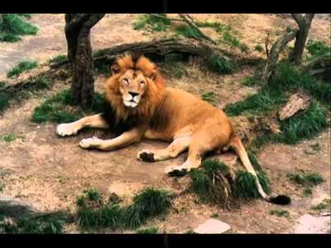 Chanson Les animaux sauvages