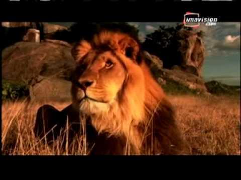 le clan des rois film avec lions qui parlent dvd youtube. Black Bedroom Furniture Sets. Home Design Ideas