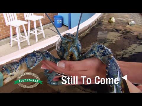 New Brunswick Adventures - Season 1  episode 3 'Acadien Coast'